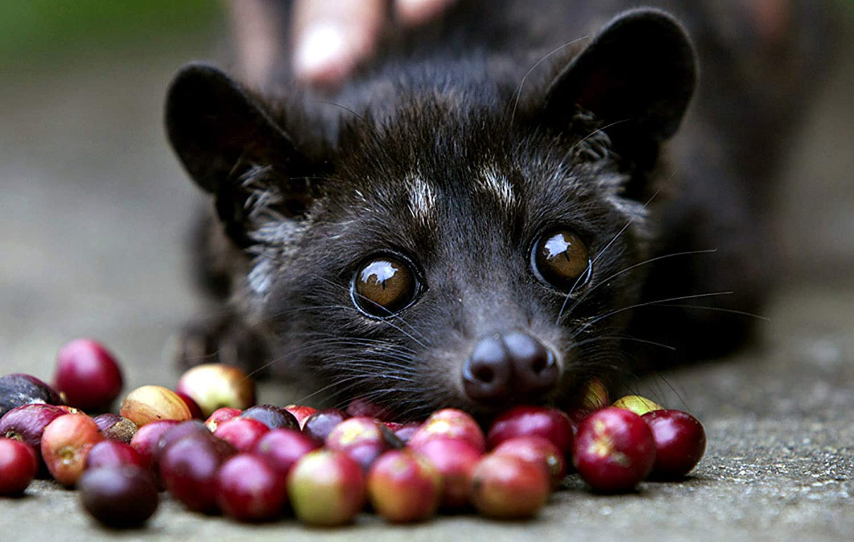 Katzenkaffee – Wirklich so gut wie alles behaupten?